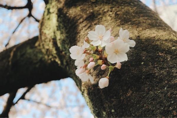 【春の訪れ】